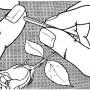 Victorinox A.3742 Пинцет короткий